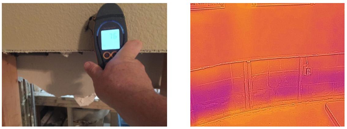 Mold & Moisture Assessment